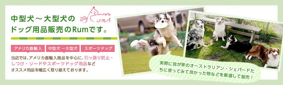 中型犬~大型犬のドッグ用品販売のラムです。